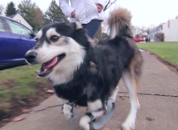 cachorro-perna-bionica