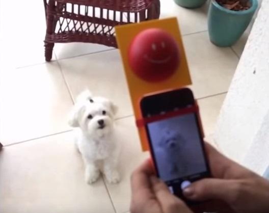 cachorro-selfie