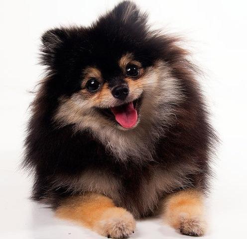 cachorro agência de modelos