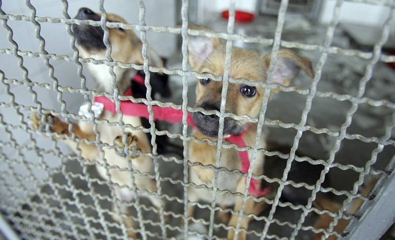 Cachorros à espera de adoção no canil do Centro de Controle de Zoonoses