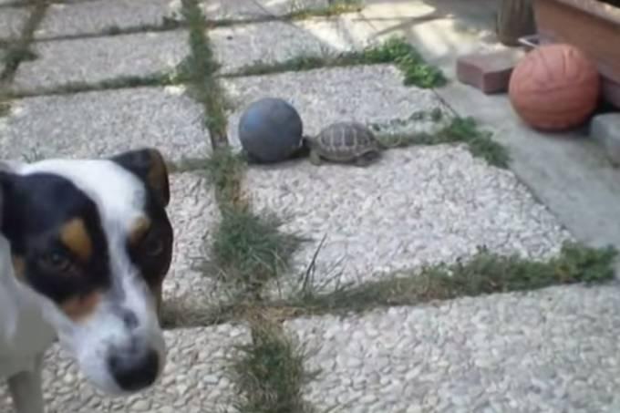 cachorroxtartaruga