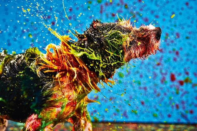 Cãozinho em ação (Foto: Alex Takaki e Lucas Tintori)