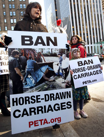 carriage-horses-1