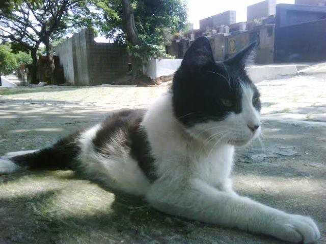 Gato Cascão Cemitério