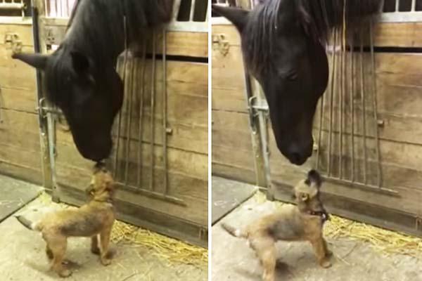 Cavalo e Cachorro