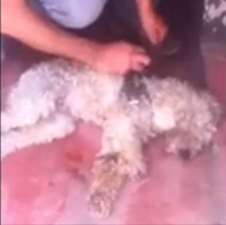 Cachorro Cão Sem Dono