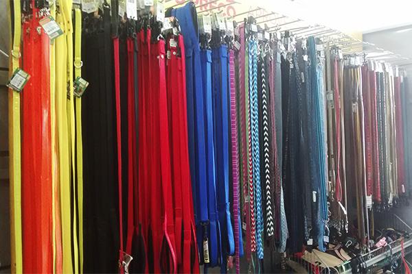 coleiras coloridas