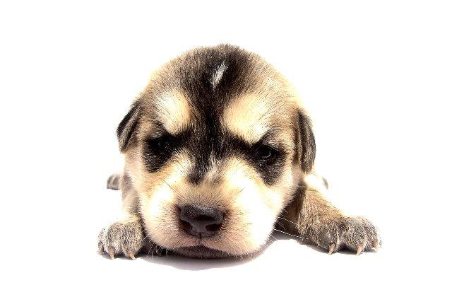 dog-1392233-1920×1280