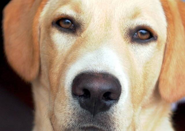 dog-1482113-1600×1200