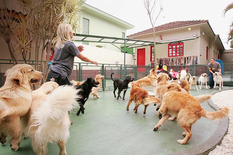 Dog's Ville: monitoramento pela internet (Foto: Fernando Moraes)