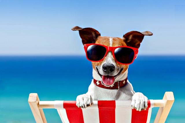 cachorro praia