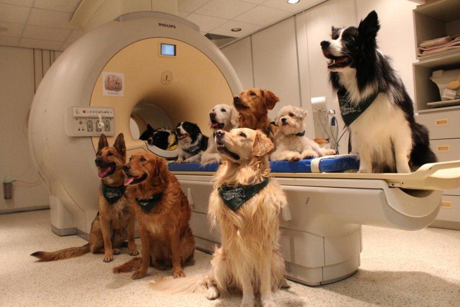 Cães entendem palavras e entonações de voz, diz revista. Crédito: Enik Kubinyi/Science