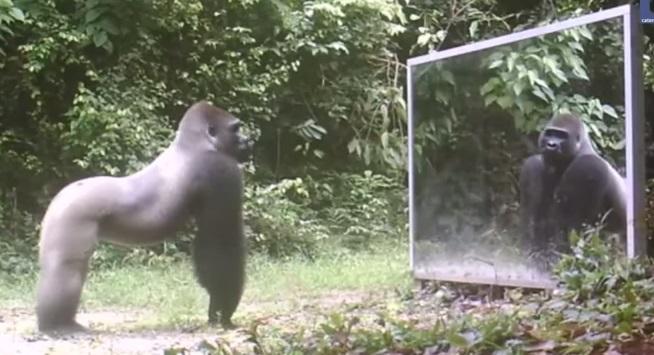 Animais espelho