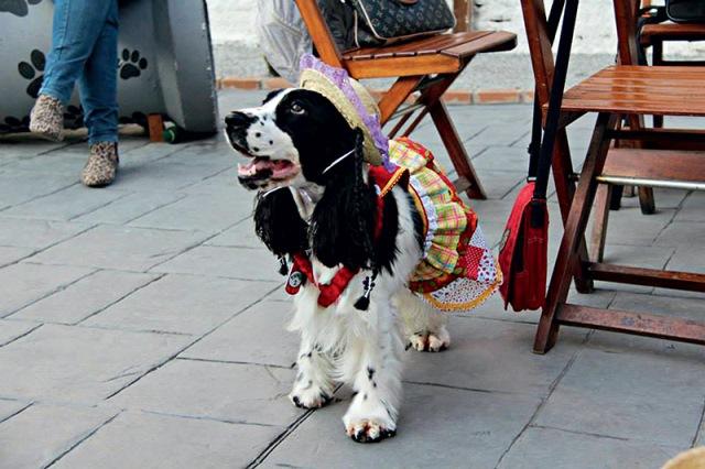 Festa junina Planet Dog Resort