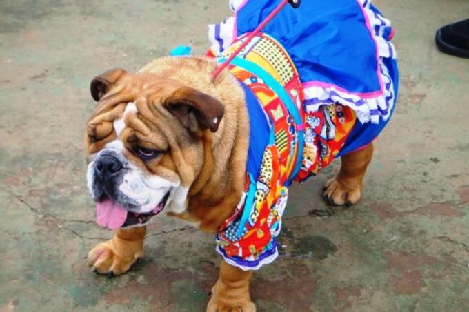 festa-junina-planet-dog-8