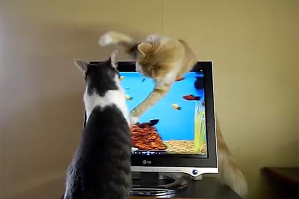 gatinhocomputador