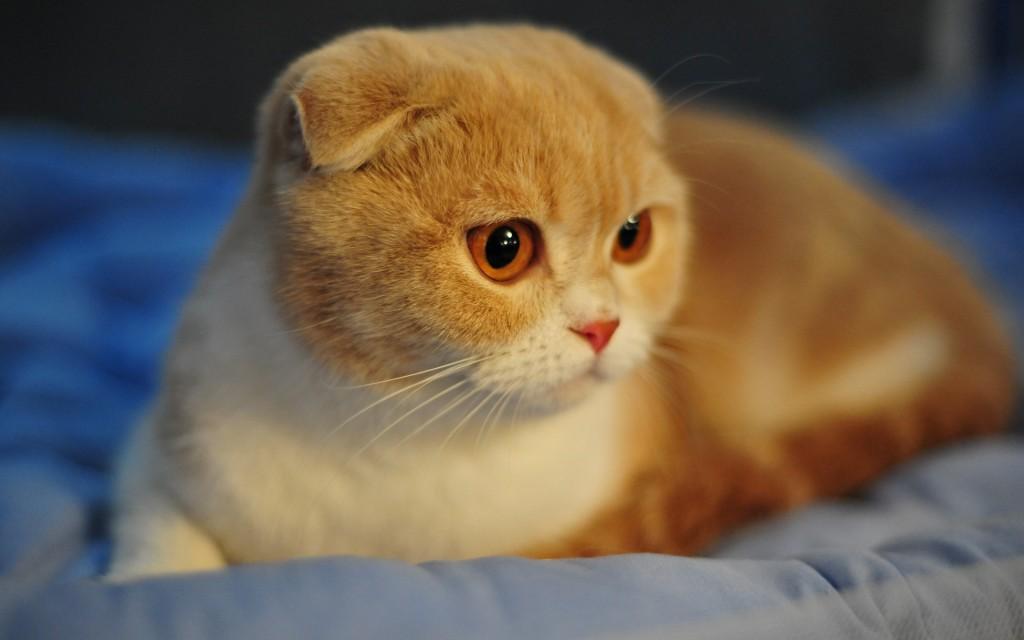 Gato amarelo