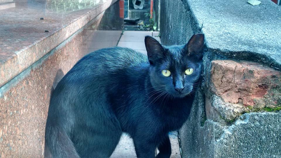 Gato que vive no cemitério: local é o lar de dezenas deles