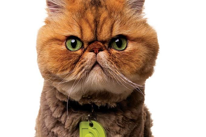 gato-baixo_path-jpg
