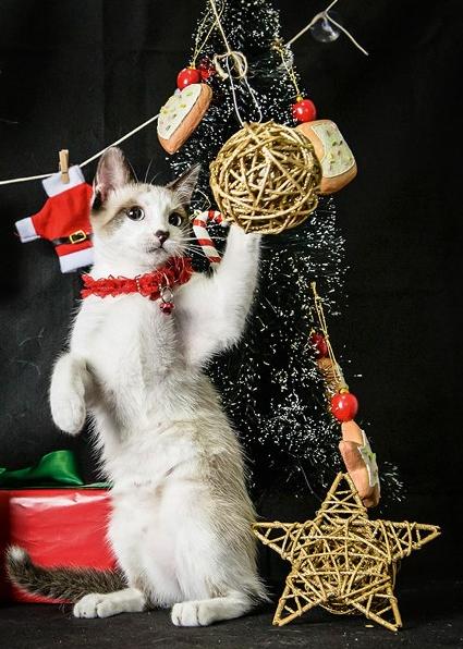 O ensaio conta com gorros e bolinhas típicas de Natal (Foto: Elayne Massaini)