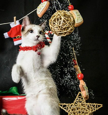 gato-natal