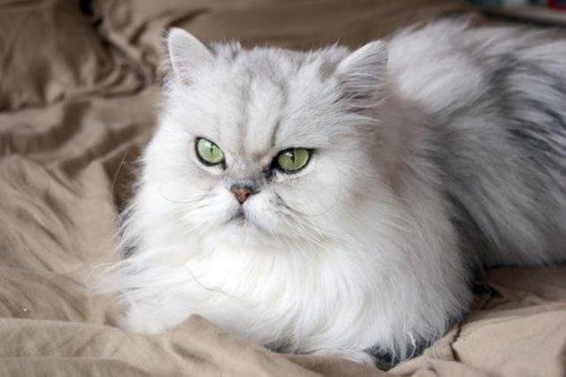 Gatos agradam a câncer, escorpião e leão. São belos, caseiros e sensíveis.