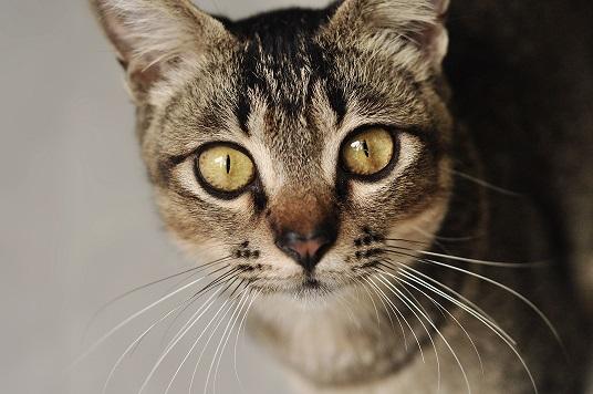 Postado em 05/02/2014 por Carolina Giovanelli 86 comentários | Comente CompartilheCompartilheCompartilhe Oito mitos sobre gatos jnjknjdk Gatinhos: não me venha com preconceitos (Foto: Stock.xchng)