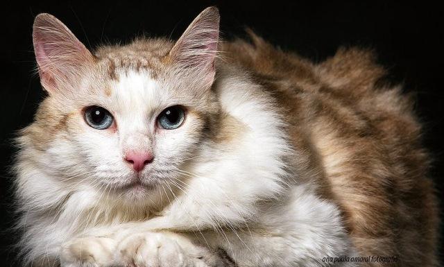 gato agência de modelos