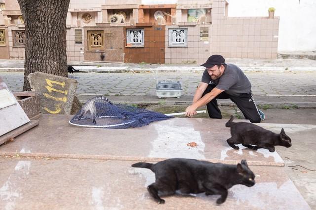 São Paulo, SP 26/04/2016 ANIMAIS ABANDONADOS - Gatos são abandonados no cemitério da Quarta Parada, na Salim Farah Maluf. Eduardo Pedroso realiza a captura dos animais e encaminha para a castração. Foto: Leo Martins