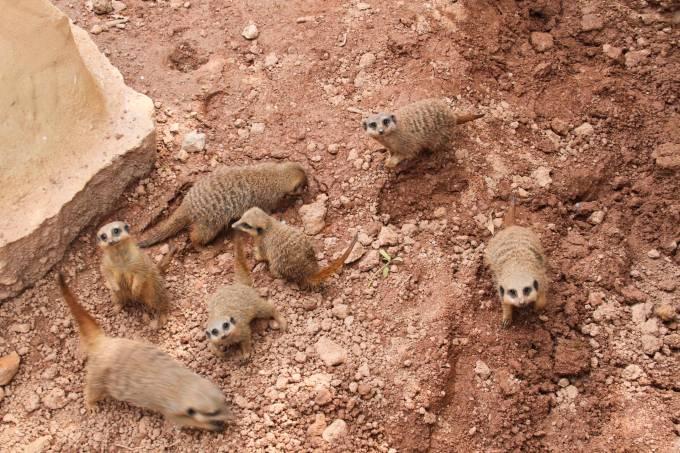 Zoológico Suricata