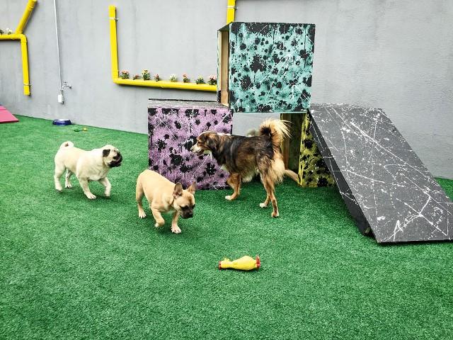 O espaço de 200 metros quadrados tem capacidade para quarenta cachorros (Foto: Divulgação)