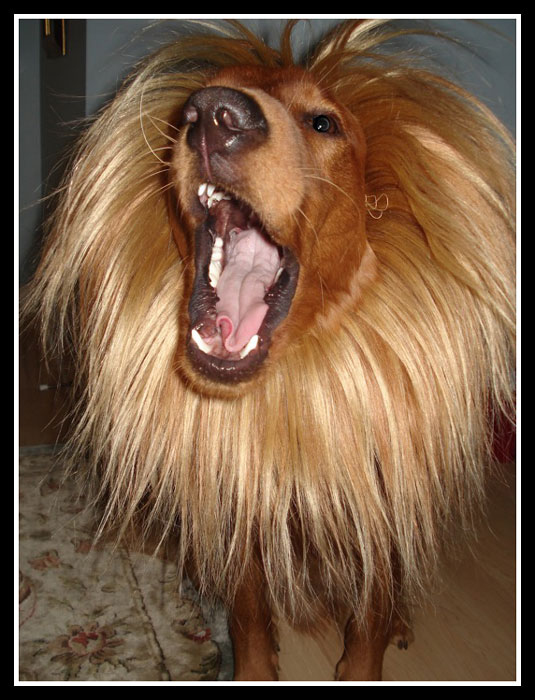 lion-costume-for-dogs