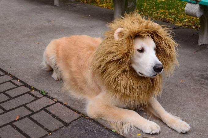 lion4jpg