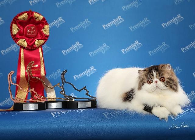A persa vencedora (Foto: Silvia Pratta/ PremieR pet)