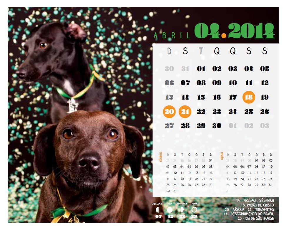 Celebridade Vira-Lata: nessa folhinha, os cães sem raça definida são as estrelas