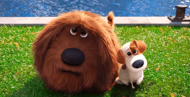 Duke e Max, os cães de 'Pets'