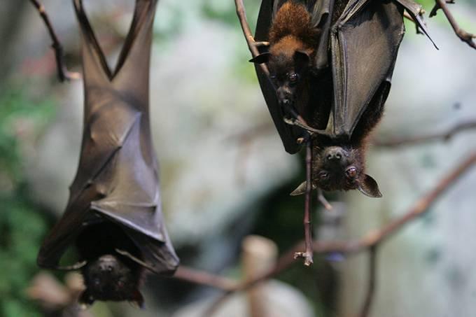 morcego_005