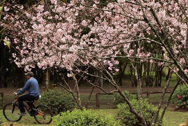 Parque do Carmo - Cerejeiras