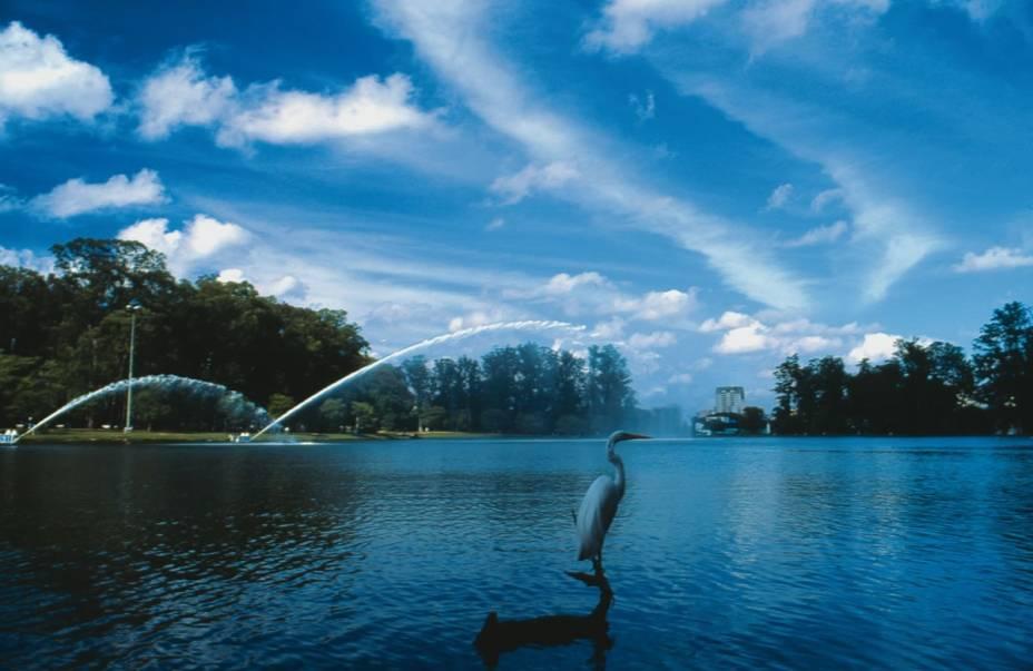 Parque do Ibirapuera: 160 espécies de animais