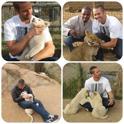 O amor de Paul Walker pelos animais