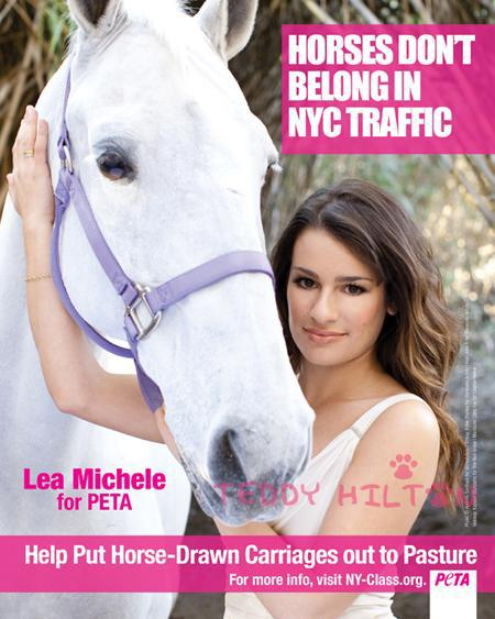 peta-strikes-back-at-horse-and-carriage-association-of-nyc__oPt
