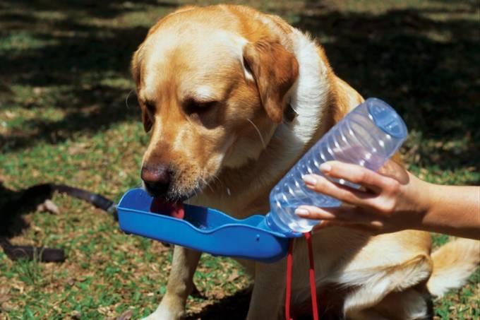 petdrink cachorro bebendo água