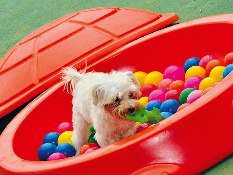 Planet Dog Resort: brincadeiras (Foto: Divulgação)