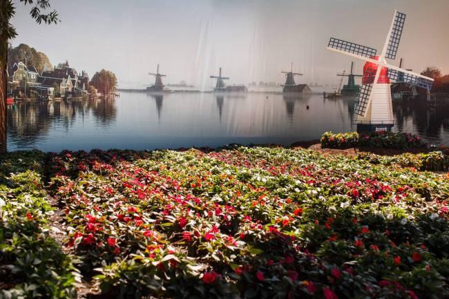 Expoflora - quintal holandês