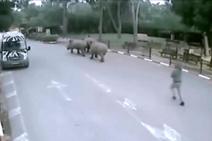 rinos-fujoes