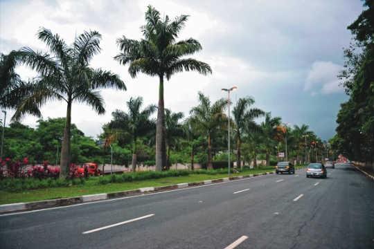 Revitalização: canteiros arborizados transformaram a Avenida Braz Leme