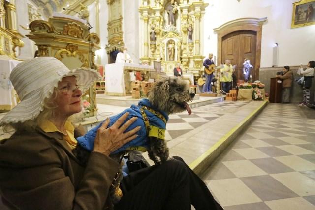 sao francisco igreja animais