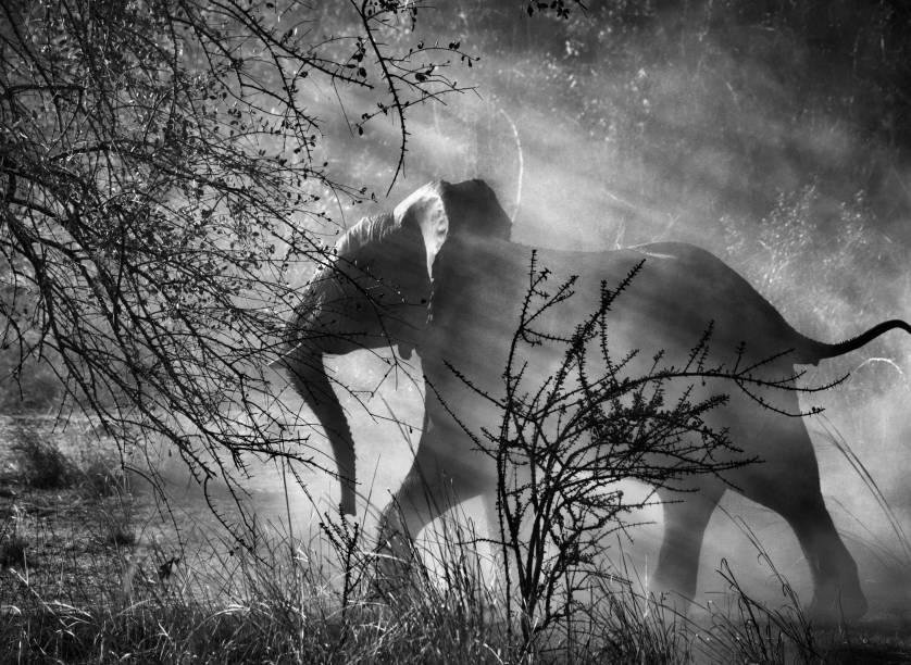 Elefante em um parque nacional na Zâmbia: andanças pelo mundo