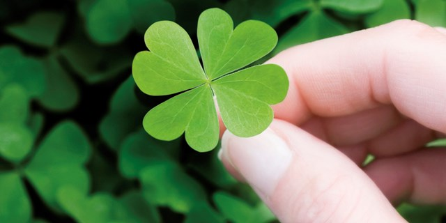 Woman holding four-leaf clover, close-up