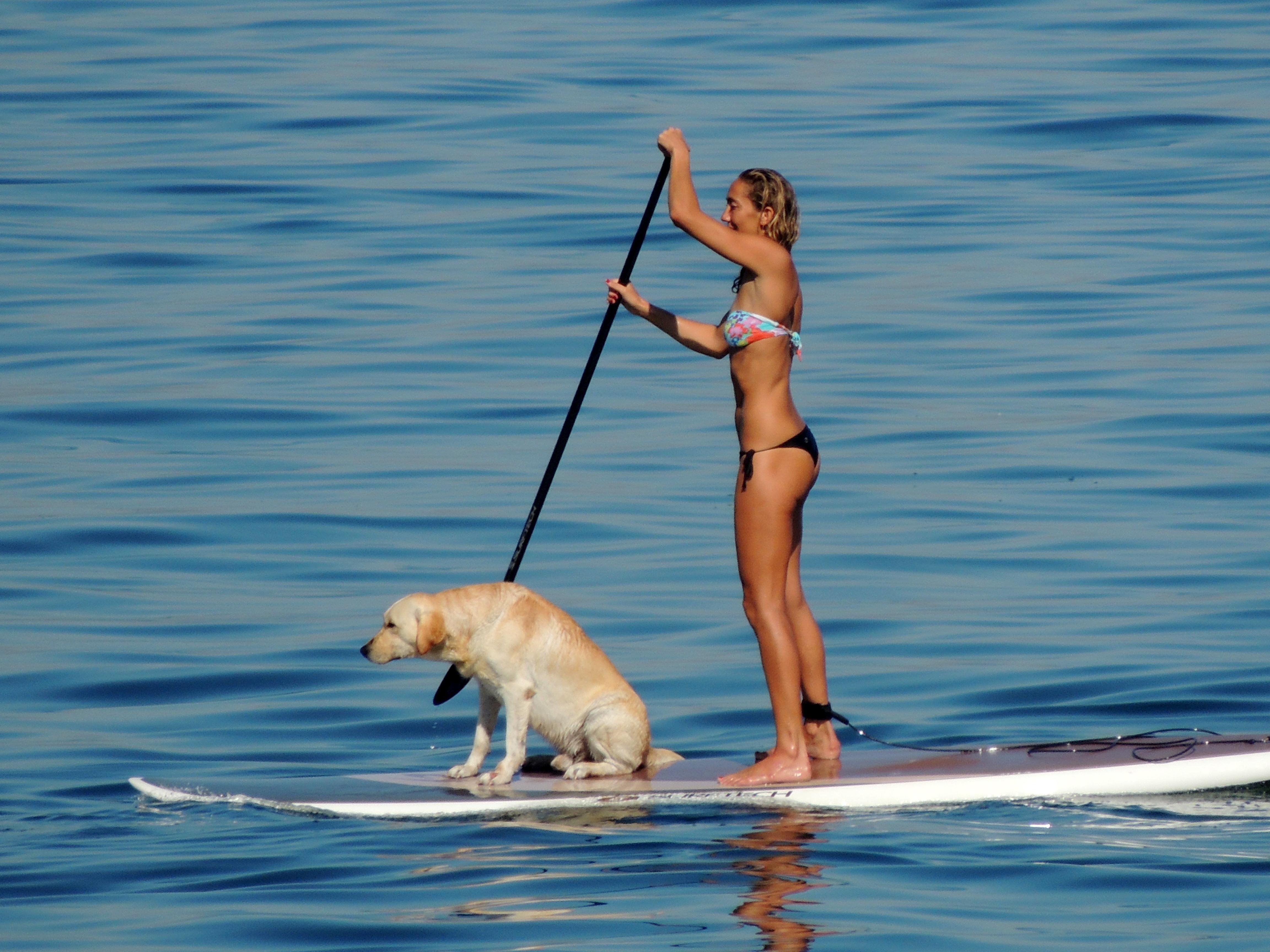 Stand Up Dogs - Ciça e Polo